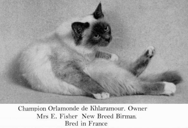 Those Who Were The Earliest Breeders Of Traditional Birmans In France Were  Anne Marie Moulin, Breeder Of Orlamonde De Khlaramour, Opale De Khlaramour  And ...